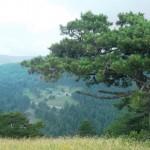 """Sakarya Orman Alanlarındaki değişim  """"SEL""""nedeni"""